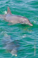 Dolphin Cruise_0799 by SkyeMarree