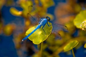 Dragonfly 1 by photo67
