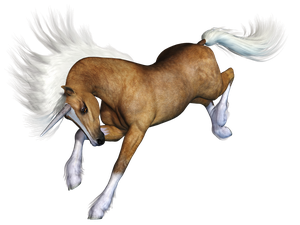 Unicorn 01 PNG Stock by Roys-Art