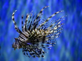 Another striped animal by NB-PhotoArt
