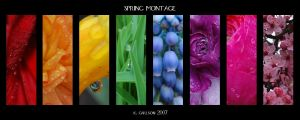 Spring Montage by katherineannecarlson