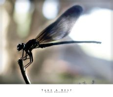 Black Dragonfly by tracingstruckted