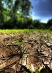 Drought. by mitch-meister