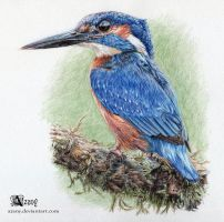Common kingfisher by Azany
