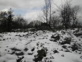burned forest, in winter by Cippman