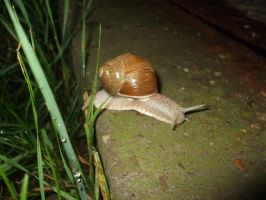 Snail collection 03 by Roack