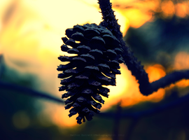 Pine cone Lights by Delton36712
