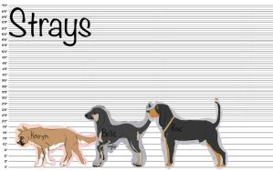 Solitude-Strays-Height Chart by OceanLore