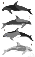 White Sided Dolphin Adoptables, Set 2 (Sold) by AnoOrcaAdoptables
