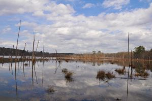 The Swamp 3-8-12 by Tailgun2009