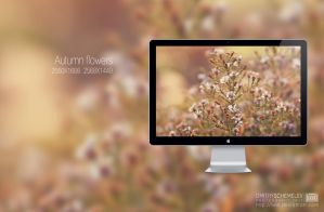 Autumn flowers by enioku