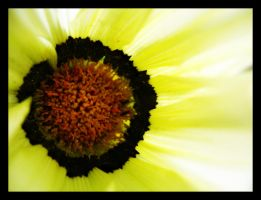 Yellow Flower by inacom