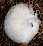 White furry doughnut. by Shutter-Bug1
