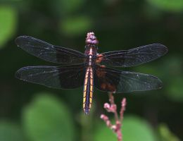 Dragonfly 20D0027456 by Cristian-M