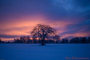 Sunrise Over My Tree by allym007