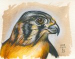 Hawk by TeresaMurphy