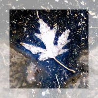 Crushed Maple Leaf by LycanDID