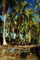 Palm Tree Reflections, Moorea by tcore