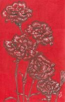 Carnations by teutelquessir