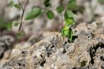 Another young iguana 2 by CyclicalCore