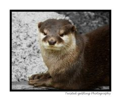 Otter Resting by twisted-gelfling