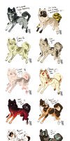 Lots of Shibe Auction Adopts!:. CLOSED by SucioPerro