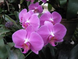 Orchids by black-cat16-stock