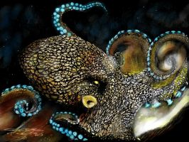 Octopus-color by acostamt