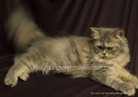 My Cats - Carmen by cosmoretro