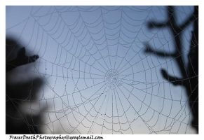 Web of Droplets by StrawBeth