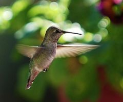 Hummingbird Blowing Bubbles by photoquilter
