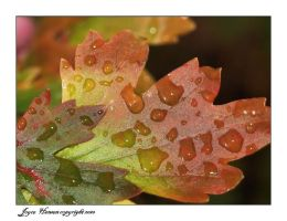 AUTUMN LEAVES IN THE RAIN by Kittihawk11