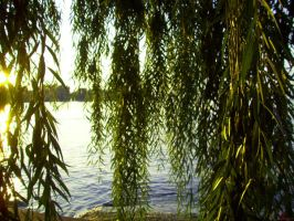 willow leaves by lady-siamix