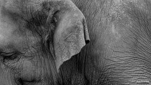 Sadness (Indian Elephant #2) by ThePusch