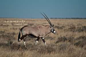 Namibia - XXI by Summerly