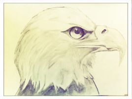 EAGLE by guesswhoever