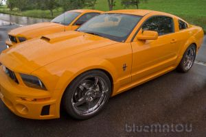 Orange Mustangs by blueMALOU