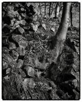 Trees and Stones 13 by HorstSchmier