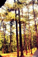 Trees for Days by kabadudles