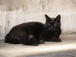 Cat in Japan:Cat on street 161 by iguru71