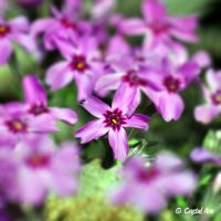 Touch of Spring 1144 by CrystalAnnPhotos