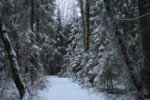 Winter forest 750 by MASYON
