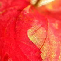 I Love Autumn by a-kid-at-heart