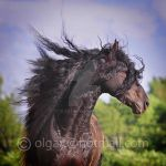 Wind in the main by Olga5