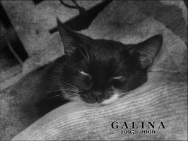 Galina 1995-2006 by famma
