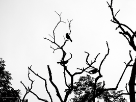Birds and branches by Mogrianne