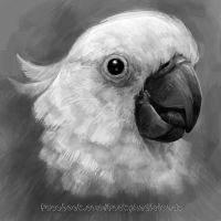Cockatoo sketch by emmil
