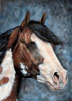 Paint horse portrait by IviiK