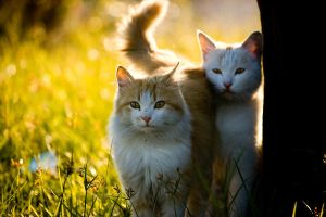 Kittens in the sun by nnenov