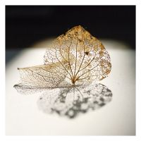 02 hydrangea leaves by MBKKR
